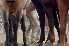 farmazoo emilia srl linea cavalli