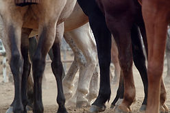 Jambes cheval