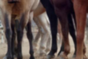 Tierphysiotherapie für Pferde und Hunde in Hannover, Celle, Peine, Gifhorn, Hildesheim, Hameln, Minden, Nienburg