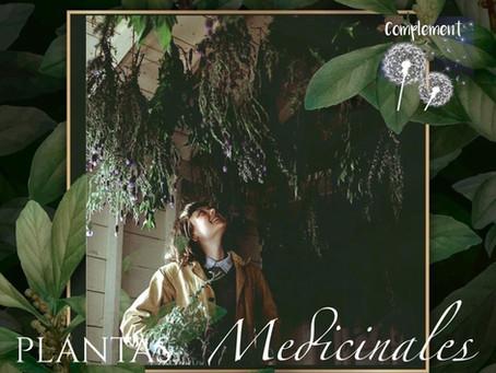 20 PLANTAS MEDICINALES, POPULARES POR SU EFICACIA.