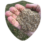 Grass Seed Shield.png