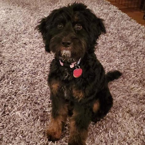 Maisie (Gold Collar)