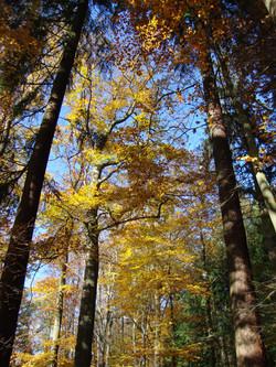 Schön ist unser Wald!