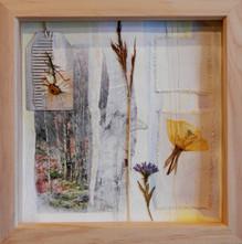 'Erecura'  mixed media on paper 24cm x 24cm