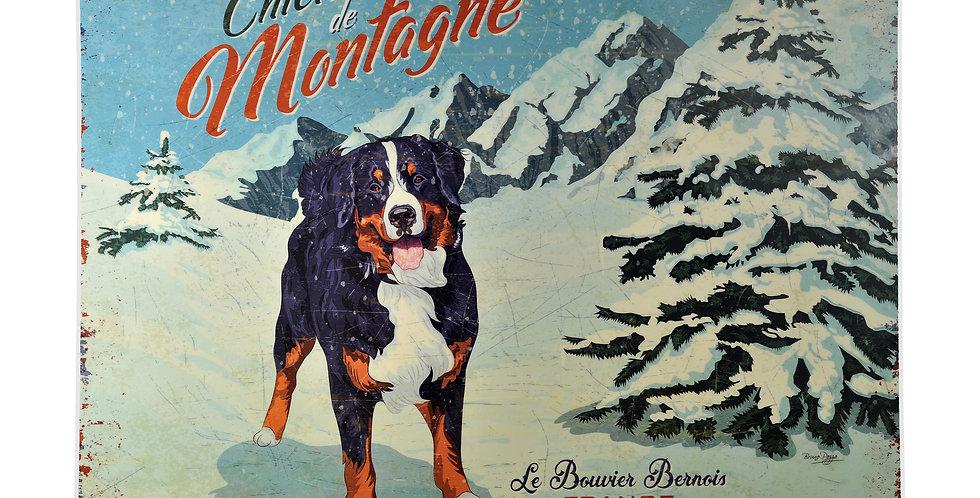 Bernese Mountain Dog Laminated Placemat