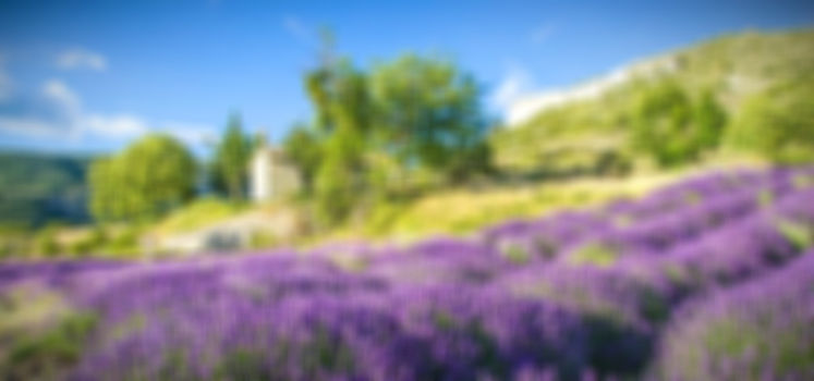 France-Provence_edited.jpg