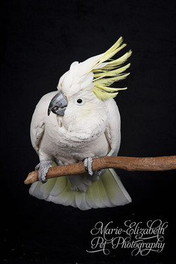 MEP-Photo-Cockatoo-Bird-Parrot.jpg