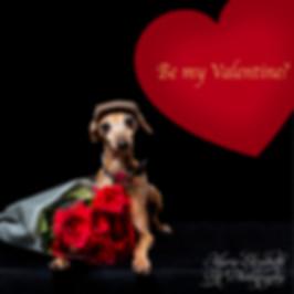 MEP-Dog-ItalianGreyhound-BeMyValentine-S