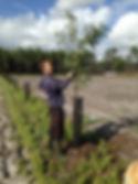 Taille des arbres 2.jpg