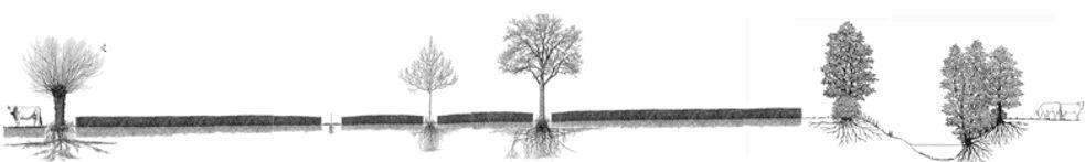 agroforesterie dessin.jpg