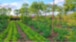 agroforesterieetlegumes_shutterstock_124