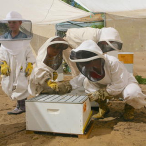 Scientists developing new solutions for honeybee colony collapse