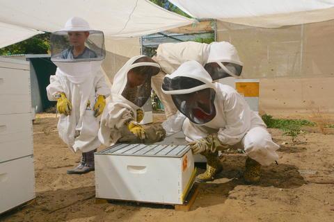Professor Boris Baer's family tending beehives in Riverside, Calif. (Boris Baer/UCR)