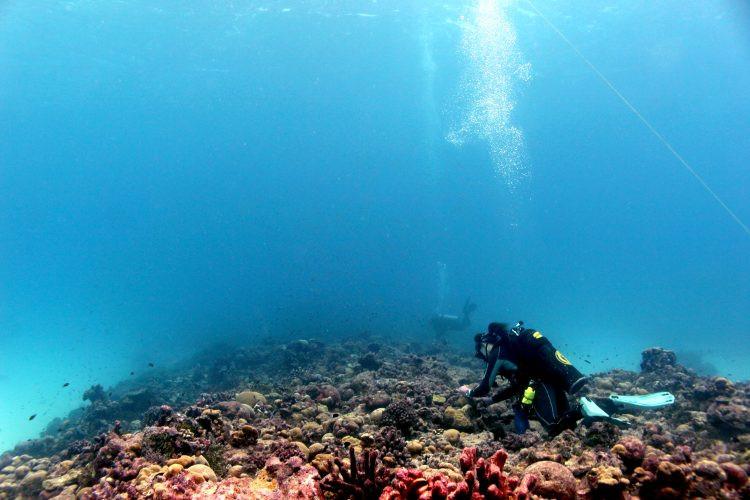 Researchers sampling coral colonies on Christmas Island (Kiritimati) in 2019.Kristina Tietjen