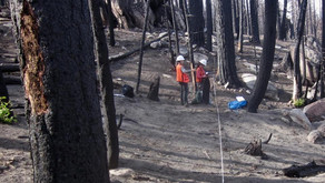 Dead Trees Fuel Wildfire Severity in Sierra Nevada