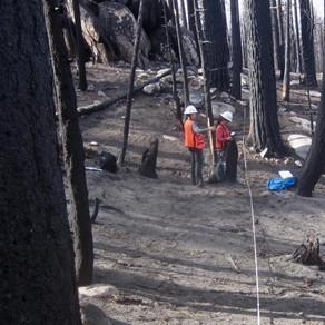 Dead Trees Fuel Wildfire Severity in Sierra Nevada