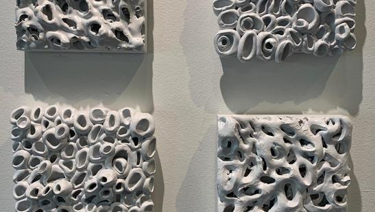 Gastropoda & Coral Reef Series