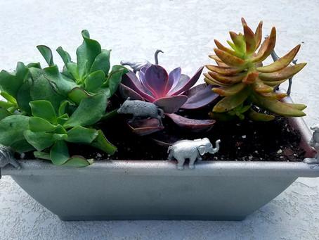 Sassy Safari Planter