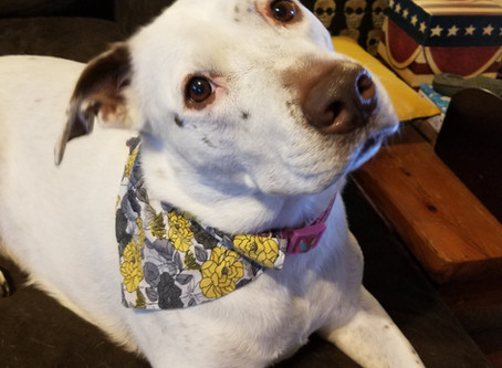 Sew Easy Dog Bandana