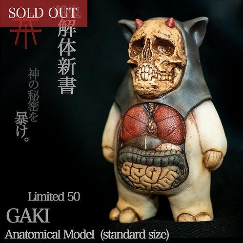 "GAKI ""Anatomical Model"" (Standard Size)"