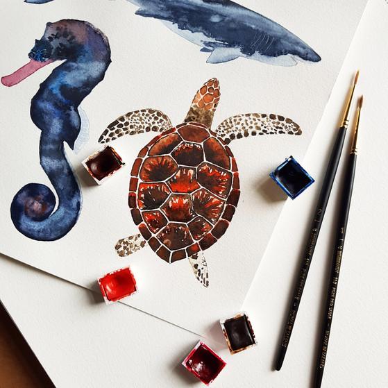 Zeedieren © StudioSonate