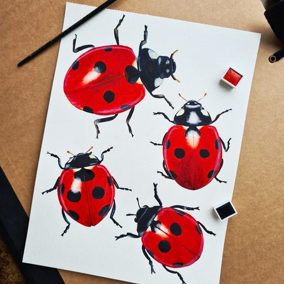 Lieveheersbeestjes © StudioSonate