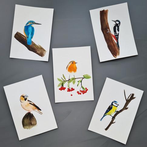 Vogels © Studio Sonate