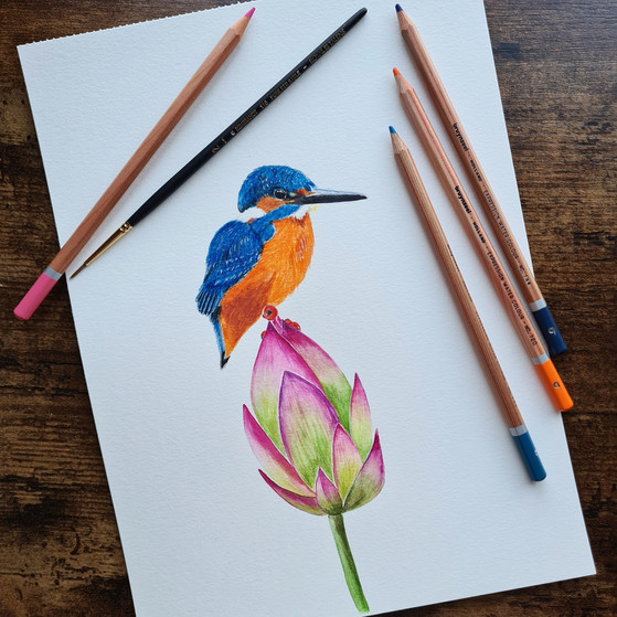 Ijsvogel © StudioSonate