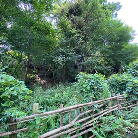 伐採樹木の打ち合わせ【傾斜地のふもとにある家】