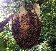 nid abeilles 2 ROVE BERI.jpg