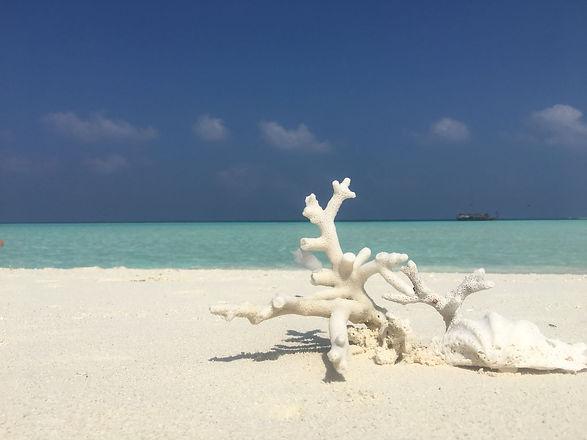 spiaggia maldive.jpg