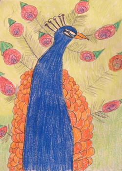 Peacock Lesson