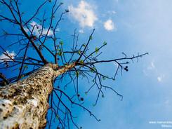 Ci-dessous de la cime des arbres