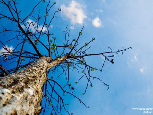 Oração para a sustentabilidade> Marsailhe Azevedo