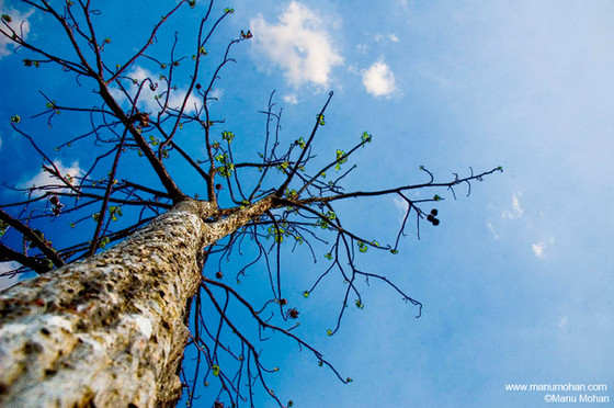 Our God is Pruning On