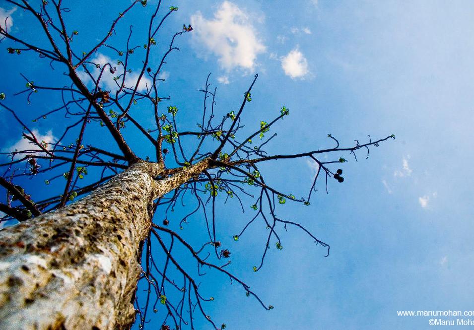 Treetop from Below