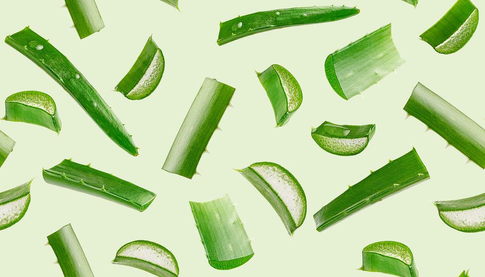 Aloe vera seamless pattern on green background..jpg