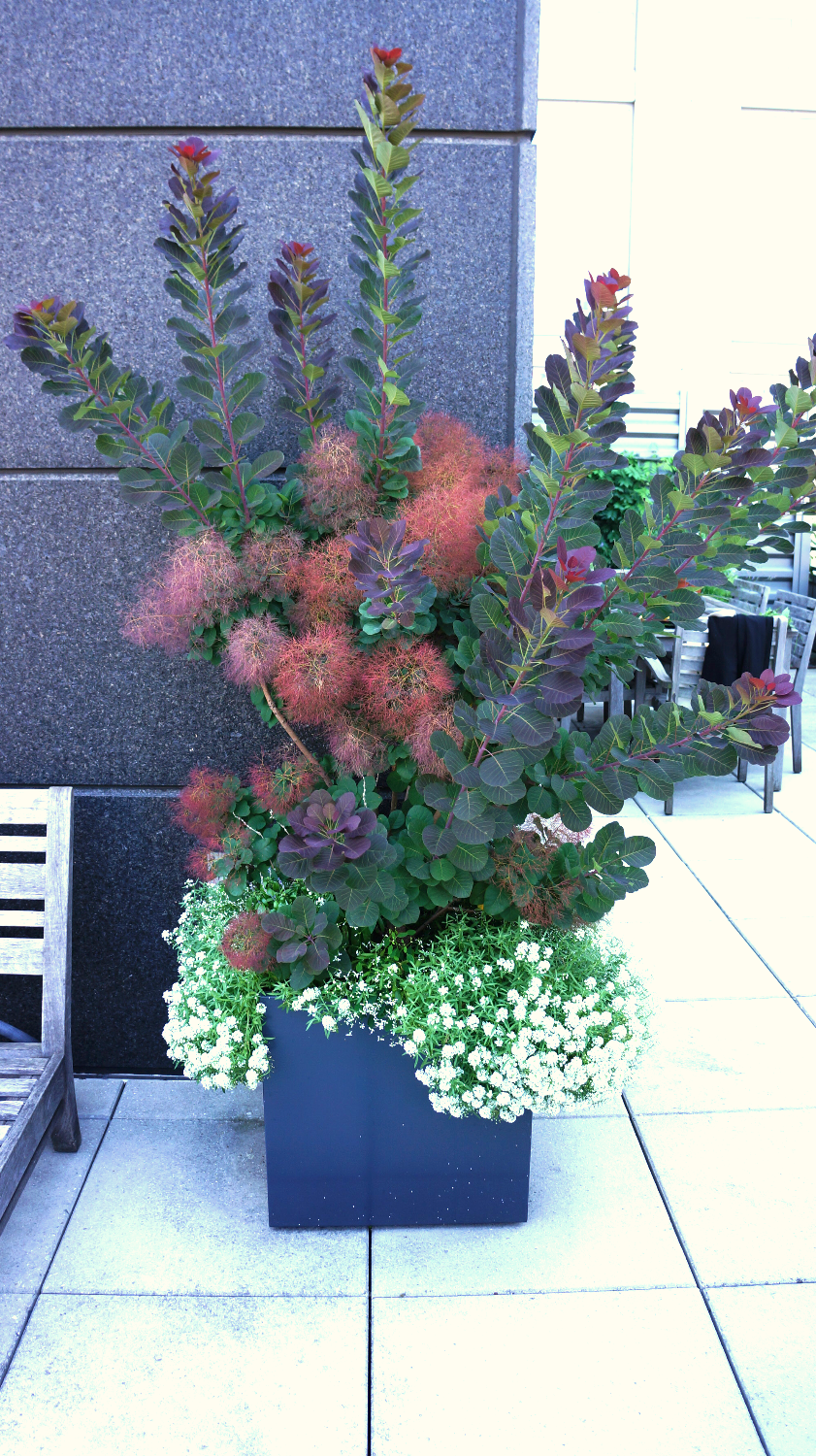 Bright,colorful plant arrangement