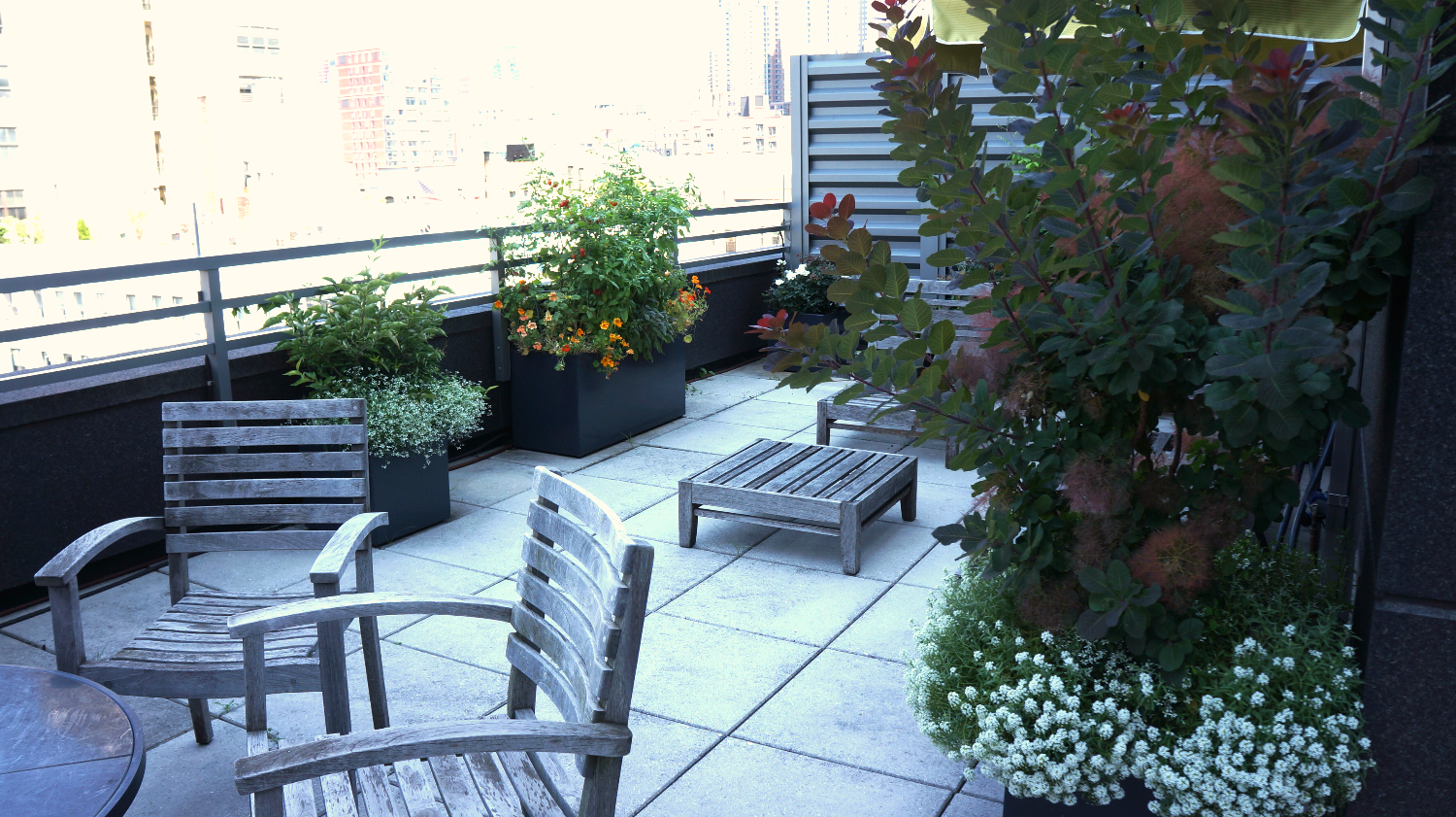Larger plants on a Manhattan terrace