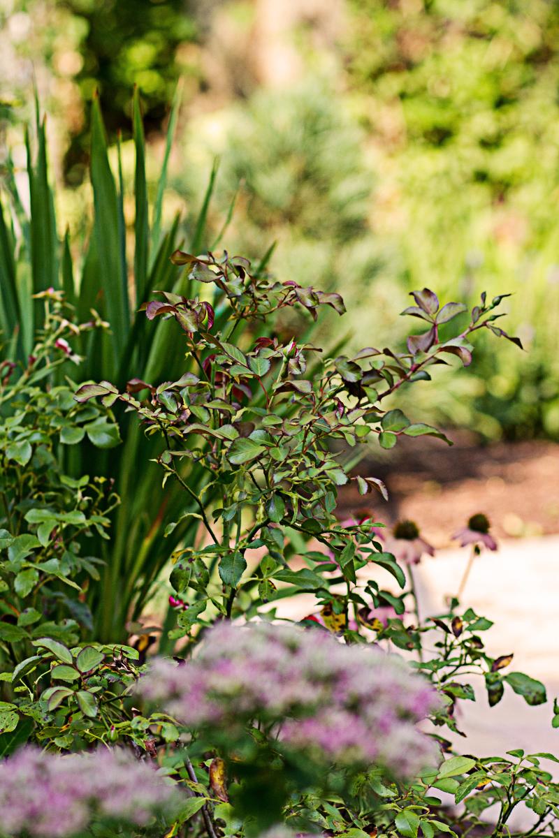 Vibrant plants accentuate the garden