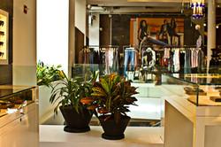 Vibrant plants for retail store