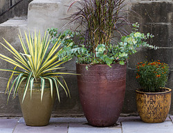 Various potted plants and flowers