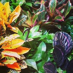 Fresh organic leaves