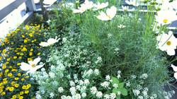 Fresh greenery in an urban setting