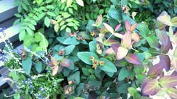 Organic berries and flowers