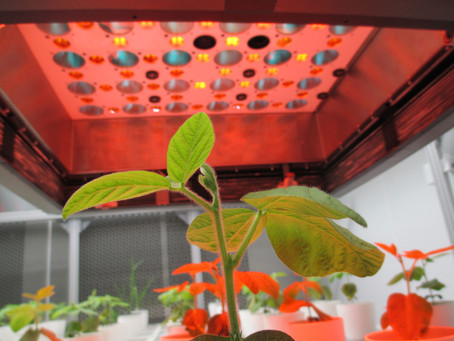 How Does My Garden Grow? With Drones, Sensors, and AI All in a Row