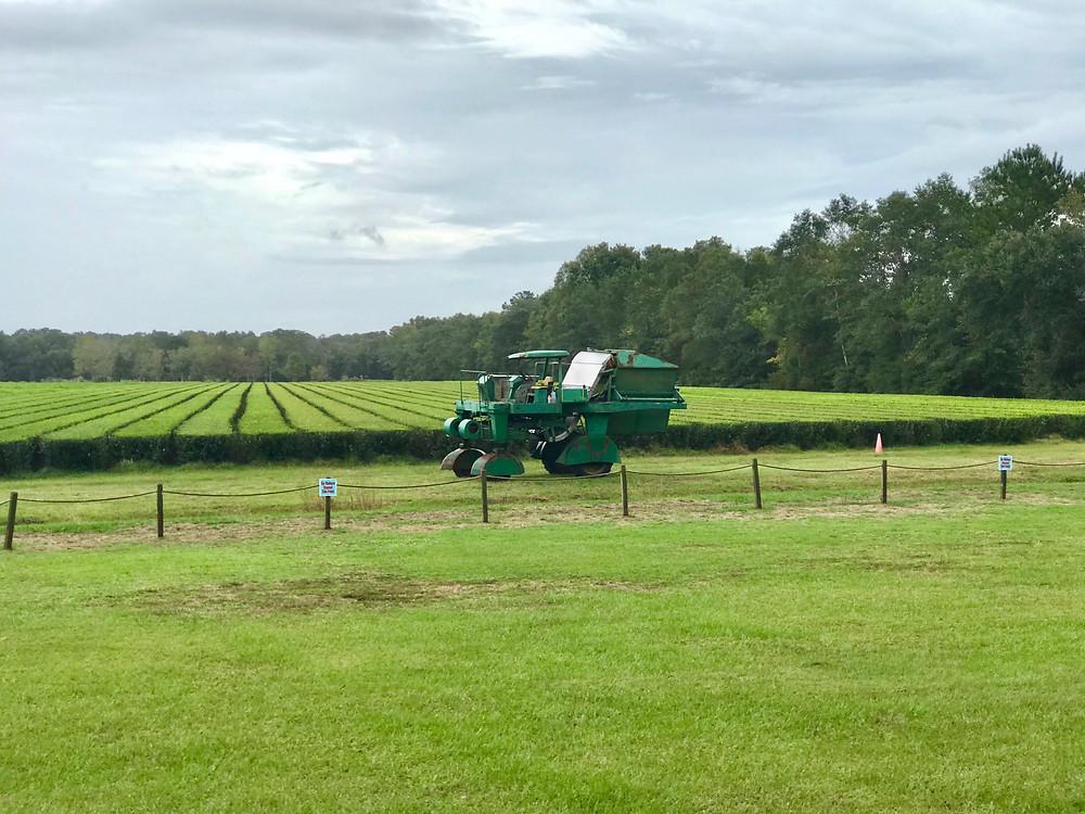 The Green Giant Tea Harvester