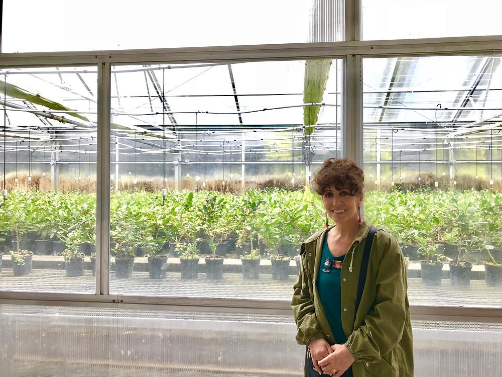 Charleston Tea Plantation greenhouse