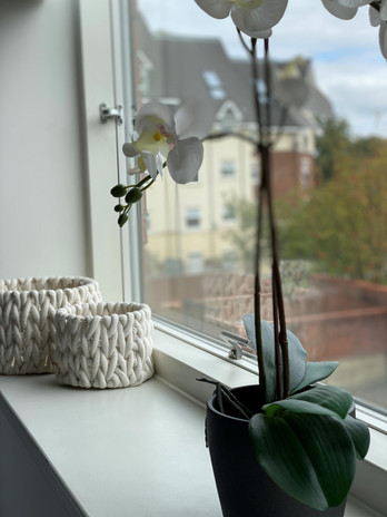 baskets & plant.jpg