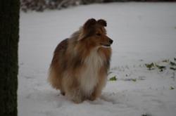 Ayla geniet van de sneeuw